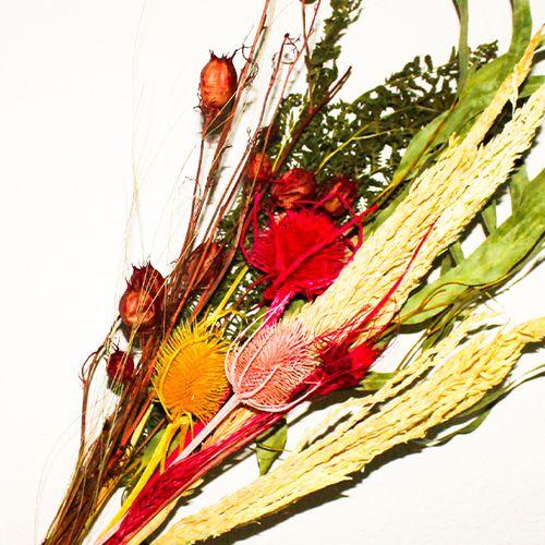 Meerkleurig droogbloemenpakket