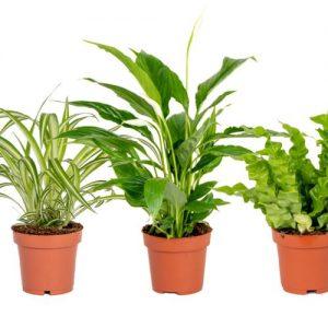 Set van 3 badkamerplanten